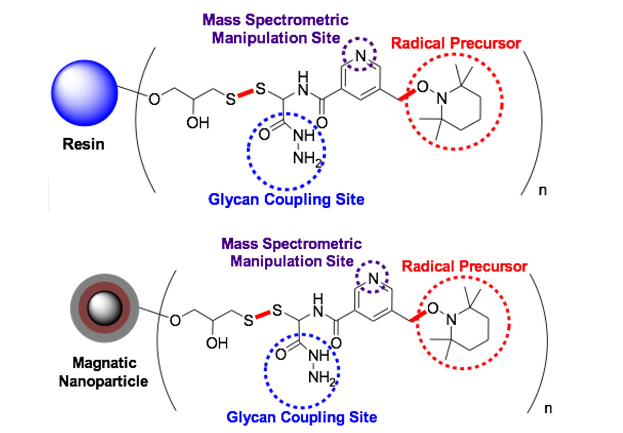 Reagents for Glycan Structure Determination